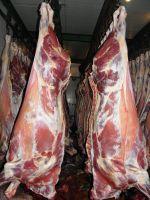 Frozen Beef Meat FOB Russia