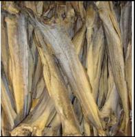Fish Frozen,dried fish
