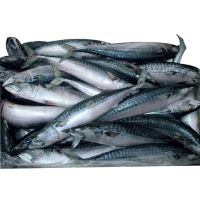 Good Price2020 New Frozen Horse Mackerel fish for sale