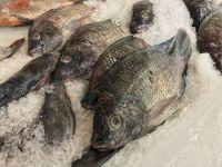 Fresh Quality Frozen Tilapia Fish Factory