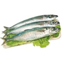 23cm+ Land Frozen Horse Mackerel/Trachurus Trachurus Fish
