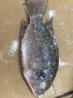 Frozen Tilapia Whole Round 100-200g Fresh Fish for Sale