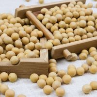 high quality organic non-gmo yellow soybean with high protein