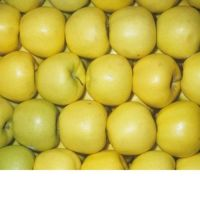 Grade A Royal Gala Apples / Fuji Apples / Red Apples / Golden Delicious Apples For sale