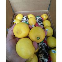 Quality Fresh Lemons / Fresh Grapes / Fresh Orange Grade A
