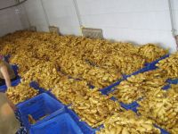 Quality fresh and air dried ginger for wholesale
