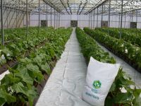 PEAT SUBSTRATE QUALITY GREENHOUSE PLANT VEGETABLE FRUIT GROWING MEDIA QUANTITY BULK SOIL