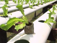 GREENHOUSE HYDROPONIC SYSTEM PEAT PELLET DISC BLOCK PLANT VEGETABLE FRUIT GROWING MEDIA