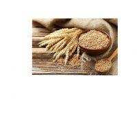 Wheat Grain in bulk / high