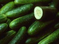 Good Quality Fresh Cucumber