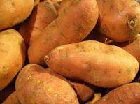High Quality Sweet Potatoes