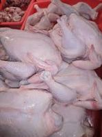 Frozen Chicken Wings, Drum Sticks, Breasts, Paws And Whole Chicken For Sale
