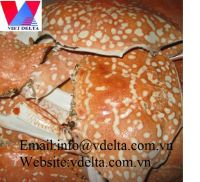 Crab Shell/Clean Crab Shell (Whole clean and dried)