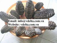 Dried Sea Cucumber (Black Prickly Fish)