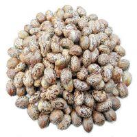 Castor Seeds