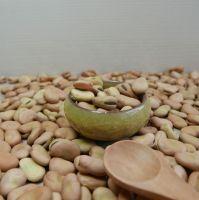 High Quality Broad Bean Fava Bean | Ethiopia Fava beans