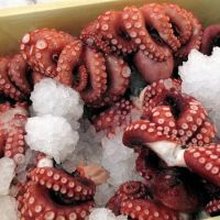 FROZEN OCTOPUS