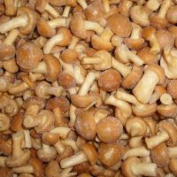 south African farm Best Selling supplier of  fresh golden mushroom