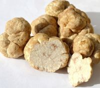 White and Black truffle, fresh truffle