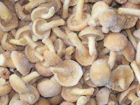 Fresh Natural  frozen mushroom
