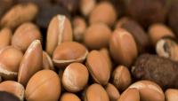 shea nuts