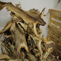 High quality Dried Stock Fish / Frozen Stock Fish