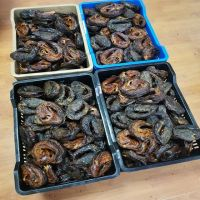 SMOKED DRIED CATFISH WHOLESALE (HIGH GRADE)