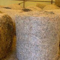 Premium Green Wheat Straw Hay Animal Feed