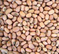 New Crop Black Eye Bean/White Cowpea bean ready