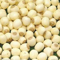 2018 BEST QUALITY LOBTUS SEED