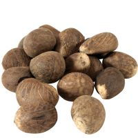 Best quality Dried tagua nuts