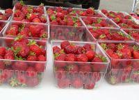 Fresh Strawberry Fruits!