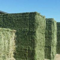 Alfalfa Hay Pellets for Animal Feed / Alfalfa Hay for sale cheap price