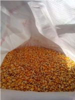 YELLOW MAIZE- NON GMO FOR SALE