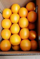 Fresh Valencia and Navel Orange