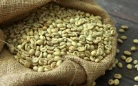 Hot Selling Arabica Green Coffee Beans