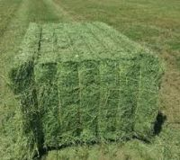 Alfafa Hay for Animal Feeding Stuff Alfalfa,hay/alfalfa hay pellets