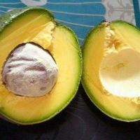 FRESH AVOCADO with HIGH QUALITY and BEST PRICE 2021 with HIGH QUALITY and BEST PRICE 2021