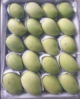 High Quality Mango 100% Fresh Mango