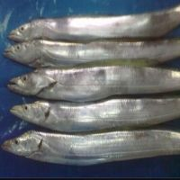 WHOLE Ribbon Fish