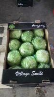 cheap lettuce
