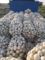 Iranian Onion