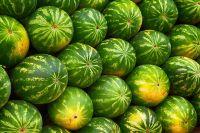 Iranian Watermelon