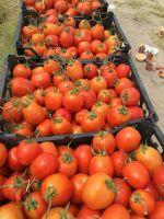 tomato for tomato paste