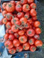 tomato for Ketchup