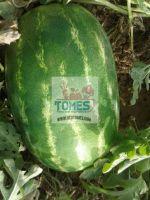 Wholesale fresh potato Iranian supplier Watermelon