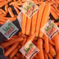 Wholesale fresh potato Iranian supplier Carrots