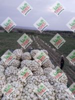 Wholesale fresh potato Iranian supplier Onion