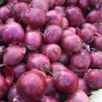 Quality Fresh White Red Onions From South Africa