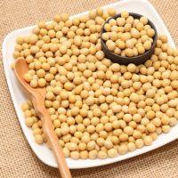 Premium Quality Organic Soybean / Soya bean / Soybeans Seeds